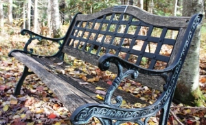 bench in leaves