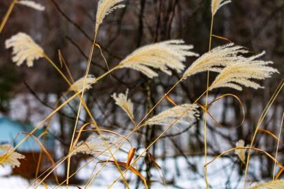 soft white grass